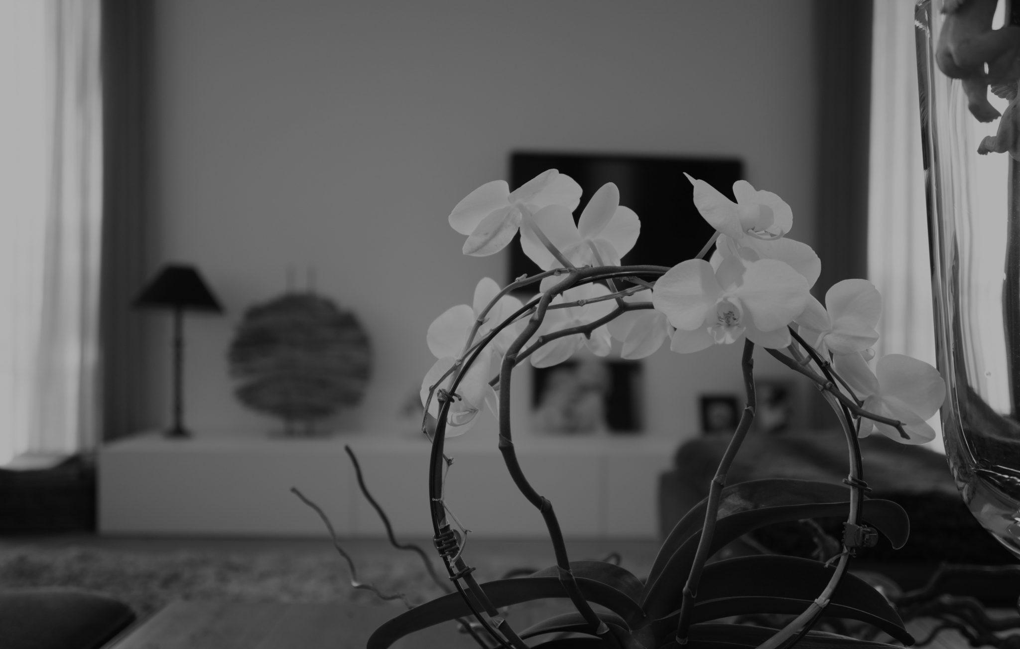 zwart wit foto van een bloem